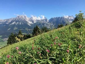 Das Naturschutzgebiet Kaisergebirge bietet eine reiche Flora und Fauna.